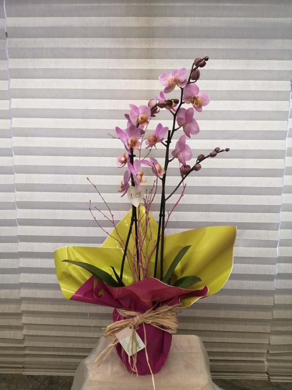 orquídea-35€.jpg
