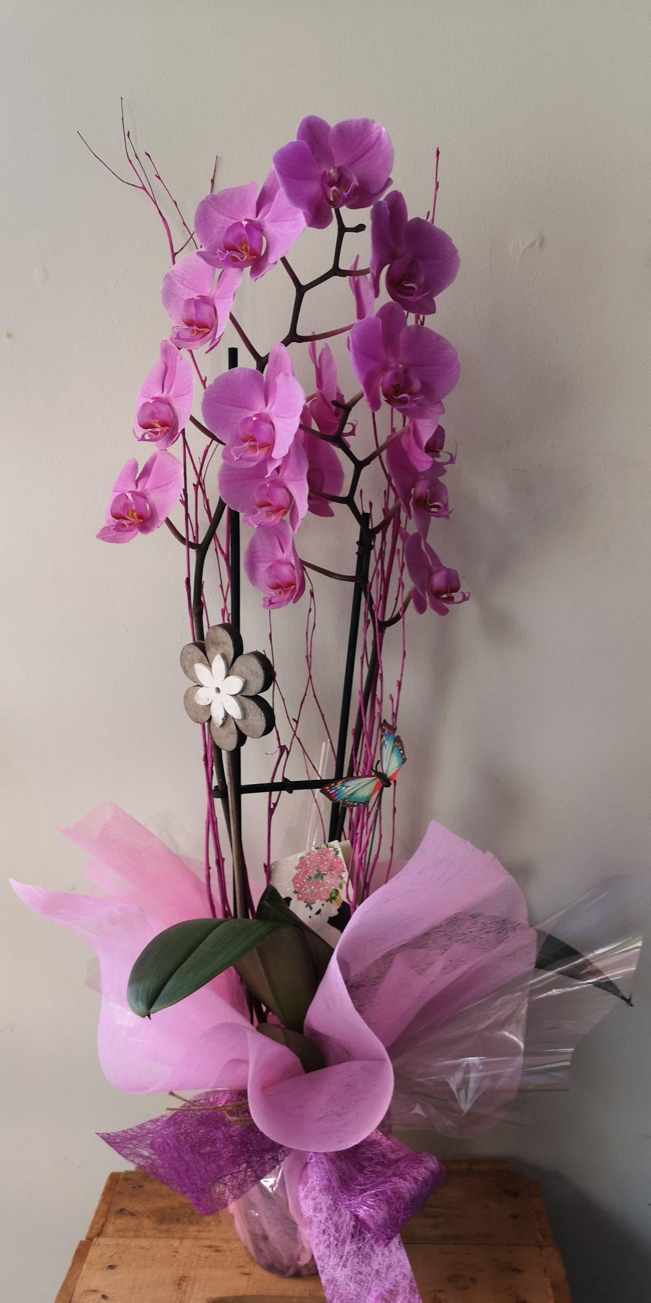 Orquídea 42€