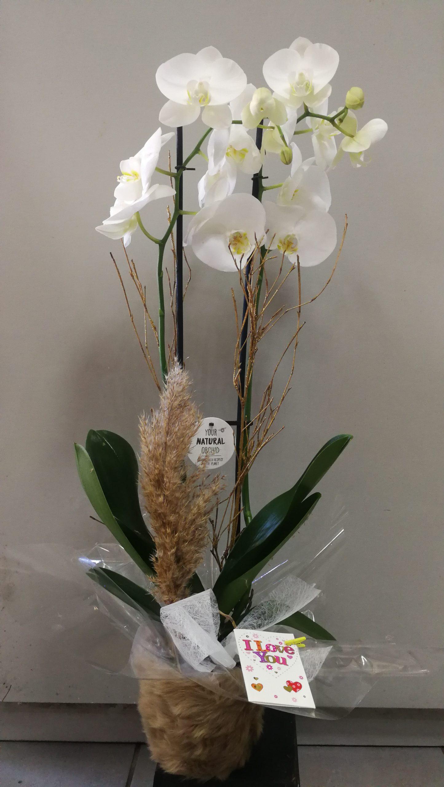 Orquídea con base 48€